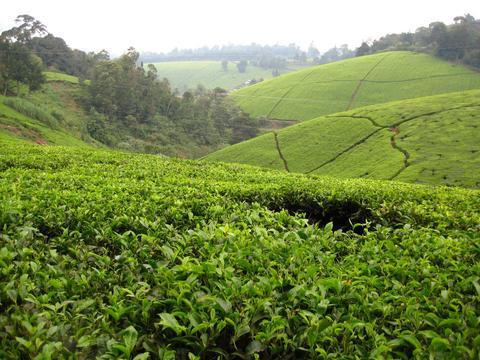 The Nairobi Chai Blend